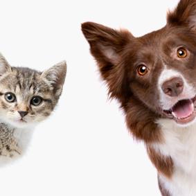 caninos y felinos de globalvet group