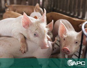Nutrición porcina nutrición animal